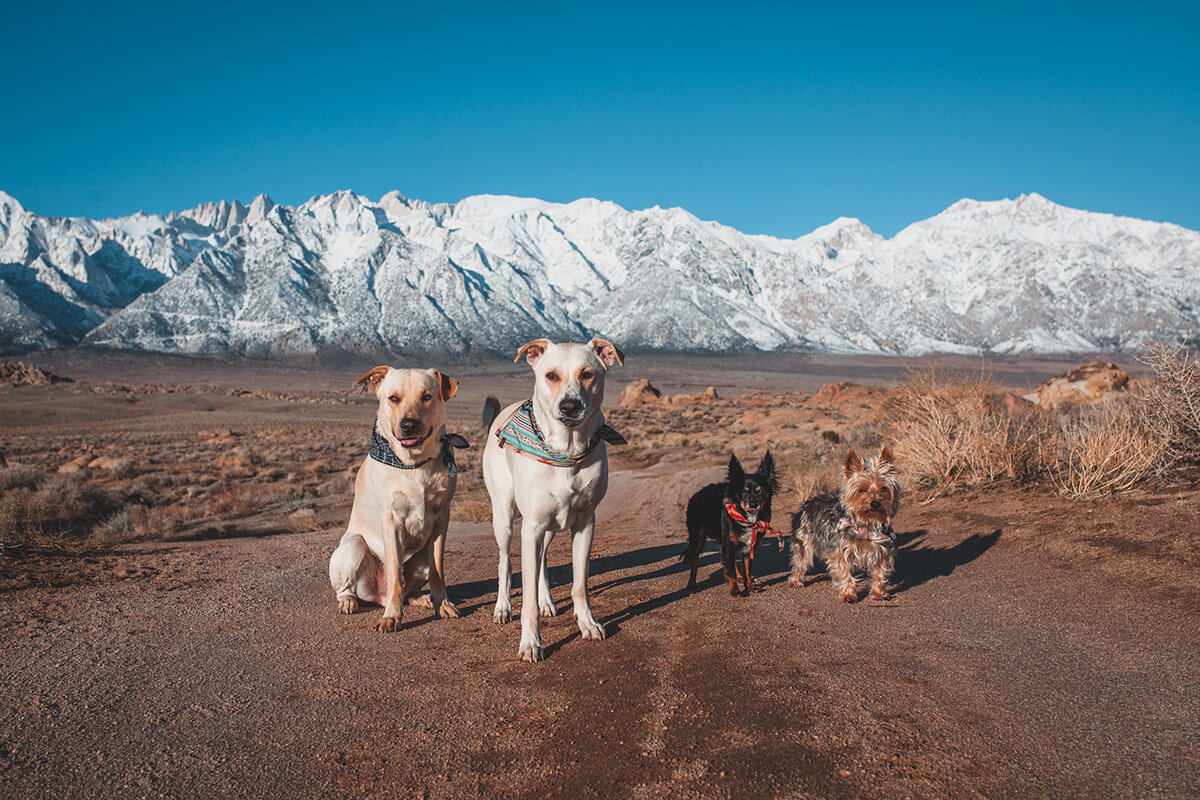 Dogs in the mountains