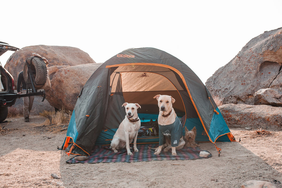Dogs camping