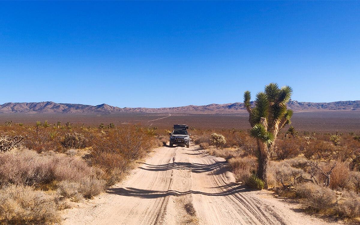 Offroadiung in the desert